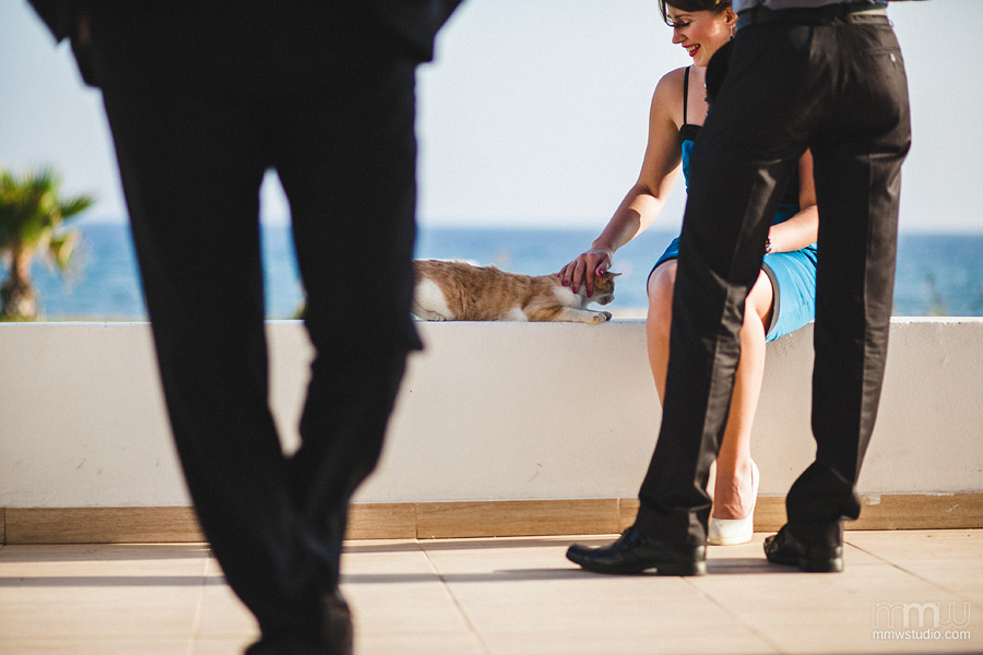 Cyprus cats on the wedding reception